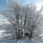Balades & Randonnées en raquettes à neige