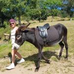 Balades et randonnées avec des ânes dans les Vosges